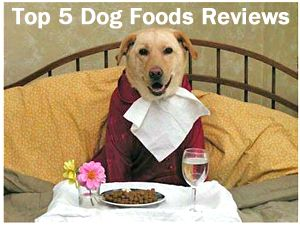 The Pet Food Review has announced its top 5 dog food picks for 2014.  I like the quality of the reviews from this source because they go beyond what a dog needs to survive  but look for what food a dog thrives on.    ... see more at PetsLady.com ... The FUN site for Animal Lovers