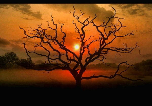 I love trees & sunsets.: Picture, Favorite Places, Nature, Beautiful Trees, Sunsets, Art, Sunrise Sunset, Albans Park, Tree Photography