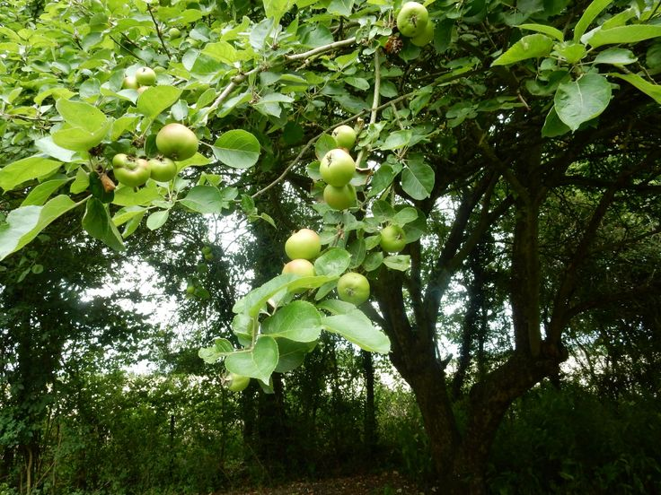 Hot from our rocking radio session under the apple tree with Whispering Bob Harris on TeamRock Radio looking forward to rocking you all at The Bull's Head Thursday and The Fleece Bristol Friday - check out Bob's apples 😎
