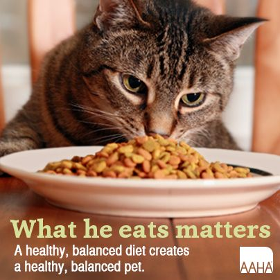 Best Cat Food To Feed Your Cat