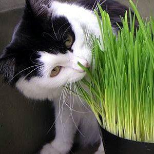 Easy Pet DIY: Grow Your Own Catnip, Pet Grass, Kitty Garden & More