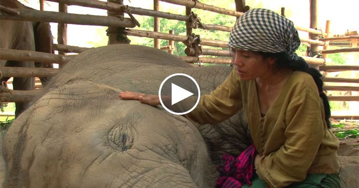 Rescued Elephant Falls Asleep to the Soothing Sounds of a Lullaby...I love elephants, I want to get this close to one.