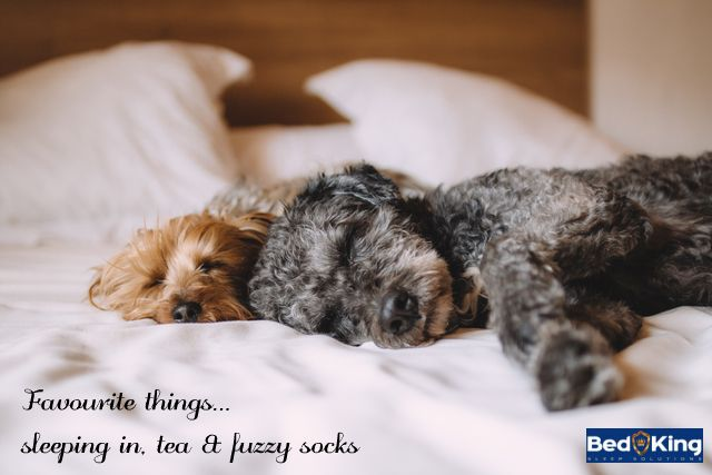 Nothing beats a great bed and a good cuddle.