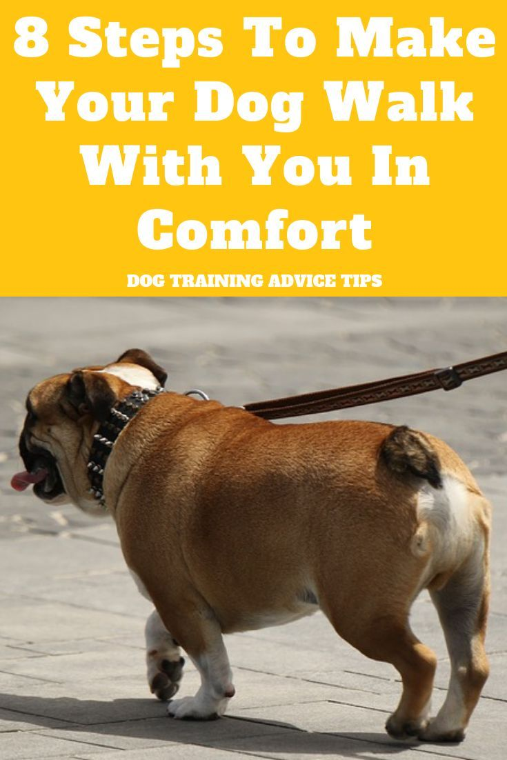 8 Steps To Make Your Dog Walk With You In Comfort Dog Training
