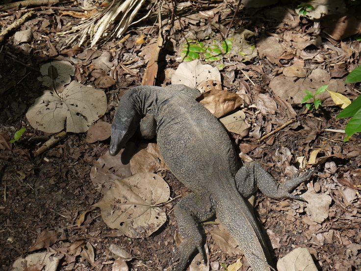 Dragon (just kidding :p)? Komodo? Lizard? I have no idea