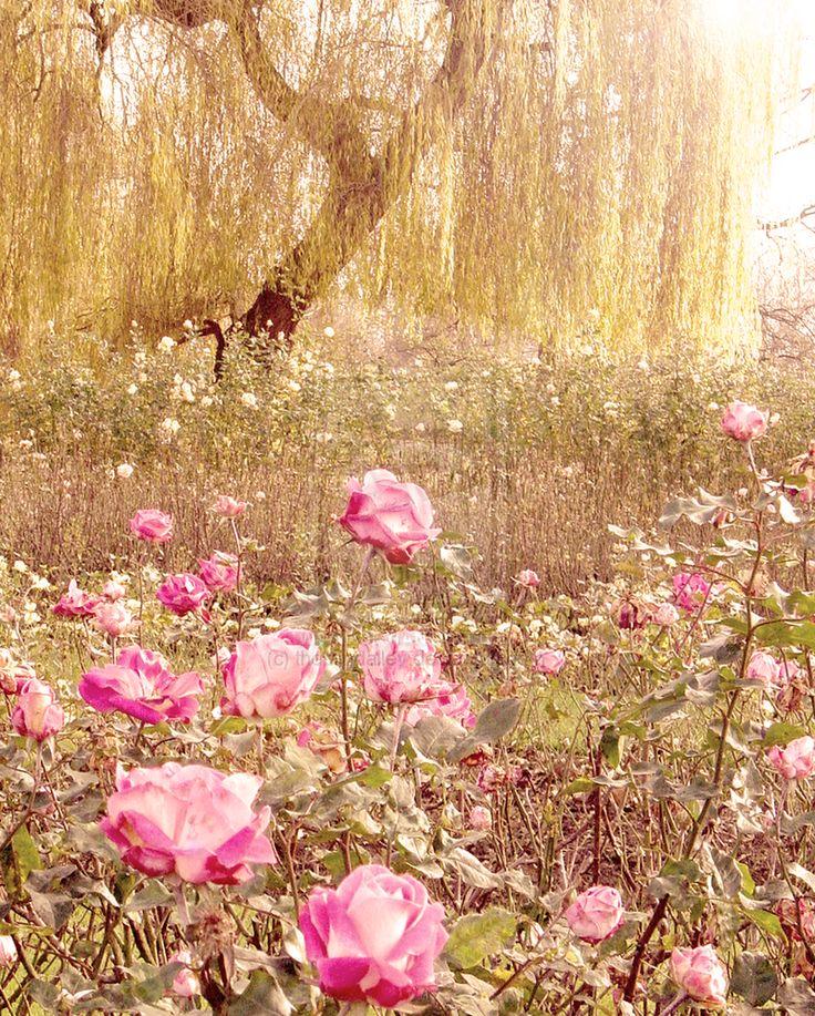 203 best Jardin Rose images on Pinterest   Gardens, Plants and Flowers