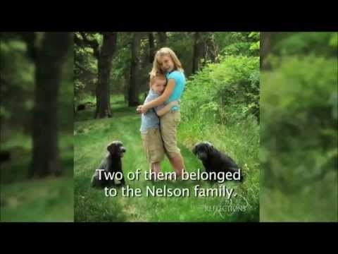 """Stevie Nelson, 2011 ASPCA Kid of the Year Video  Stevie's story. Turning tragedy in to triumph for animals in need.     """"Because all animals need love...""""~Stevie Nelson, 2011 ASPCA Kid of the Year    Video footage courtesy of ASPCA and Kate Milliken."""