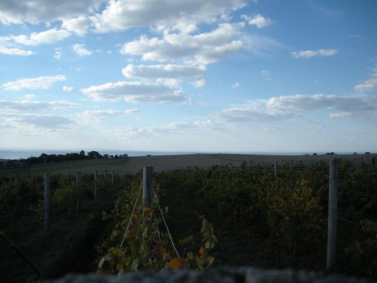 Sleepy Hollow Vineyard - Bellarine Peninsula - International Cool Climate Wine Show entrant