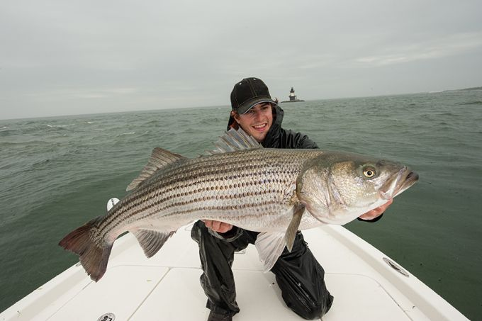 Striper fishing trim the fins on your live bait field for Striper fishing bait