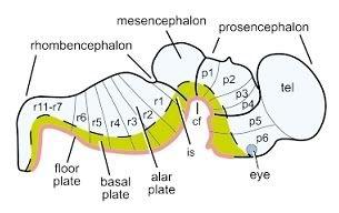 http://neurobiotaxis.livejournal.com/8430.html