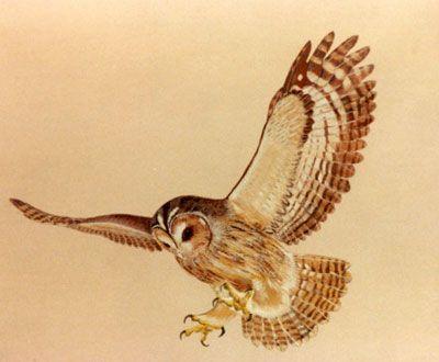 Flying Owl Tattoos