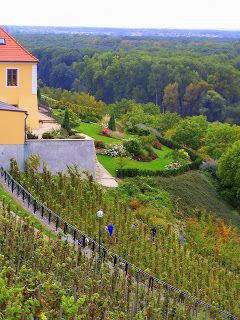 ,The area is famous for its wine. When Charles IV, the Czech king and Emperor of The Holy Roman Empire brought wine from Burgundia and improved Melnik vineyards, the town importance grew. The importance of the town started to increase again in 19th and 20th century, when new industries were introduced in the town. You can buy wine in the castle and have lunch in a castle restaurant with view of the confluence of the rivers.