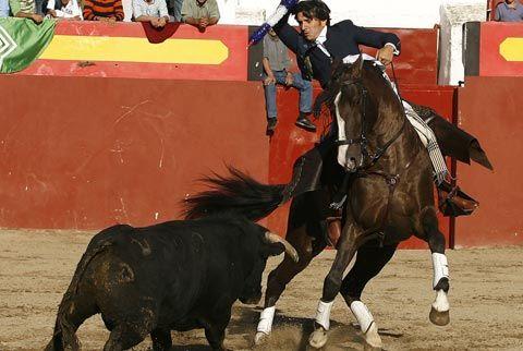 BROZAS 4 orejas y 2 rabos en tarde triunfal Ventura hace pleno - Mundotoro.com #rejones #rejoneador #Ventura #Brozas #Caceres