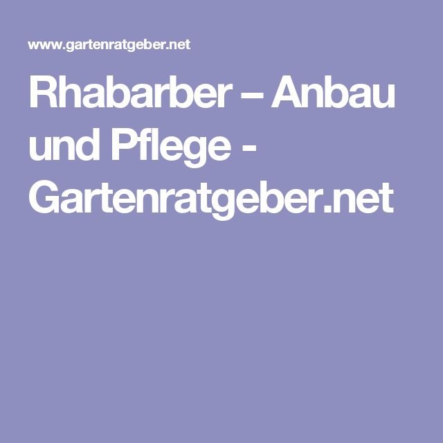 Rhabarber – Anbau und Pflege - Gartenratgeber.net