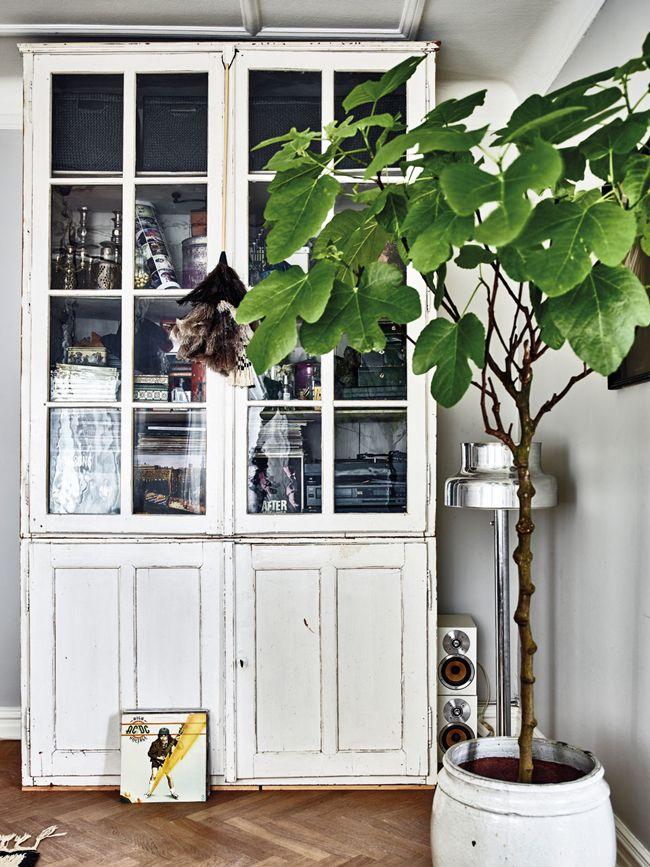372 best Indoor trees images on Pinterest | Indoor trees ...