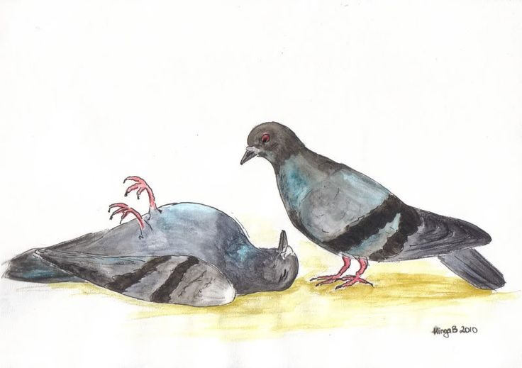 Possible solution #3: a civil war in pigeonland!