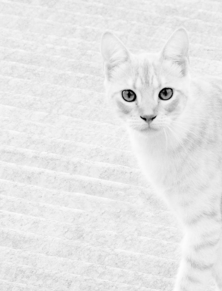Cat in High key