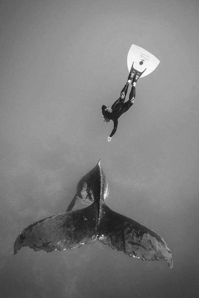 Photo © Vincent Truchet. #UnderWater #Whale #FreeDive