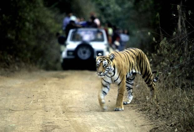 Conservation Drones to be used to monitor Tiger Population in the Reserves :http://gktomorrow.com/2017/03/07/conservation-drones-used-monitor-tigers/