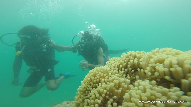 Here are the list of the best #Scuba #Diving Courses in #Andaman #Islands for both beginners and advanced divers.