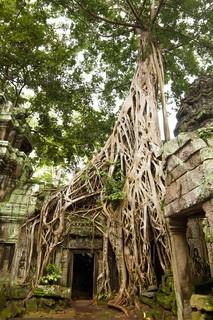 Ancient Ta Prohm or Rajavihara Temple at Angkor, Siem Reap, stock photo