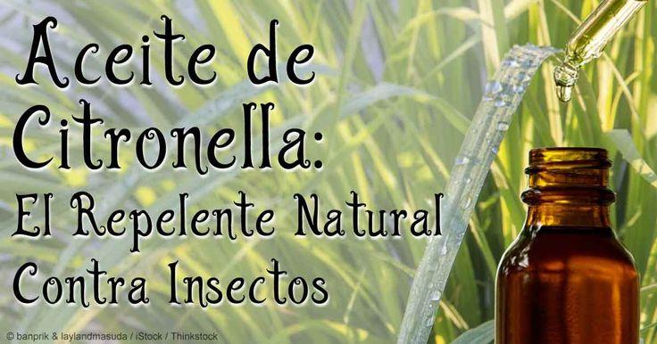 Descubra la información importante sobre el aceite de citronela, incluyendo sus beneficios, usos y composición. http://articulos.mercola.com/aceites-herbales/aceite-de-citronela.aspx