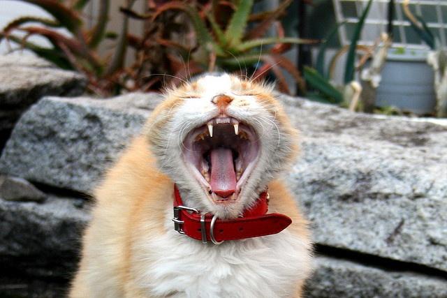 "Alley cat called ""mari-chan"""