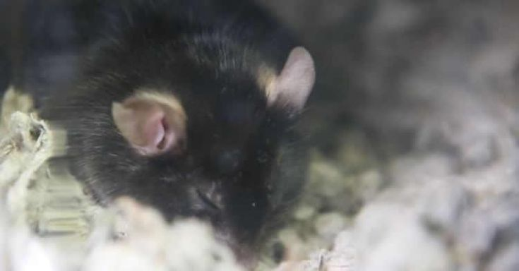 According to a new study, slow wave sleep depends on the activity of calcium inside neurons.