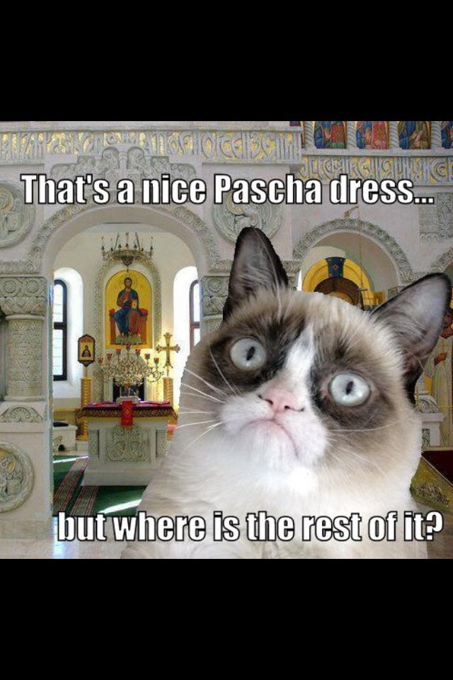 Grumpy Orthodox Cat OMG there it is!!