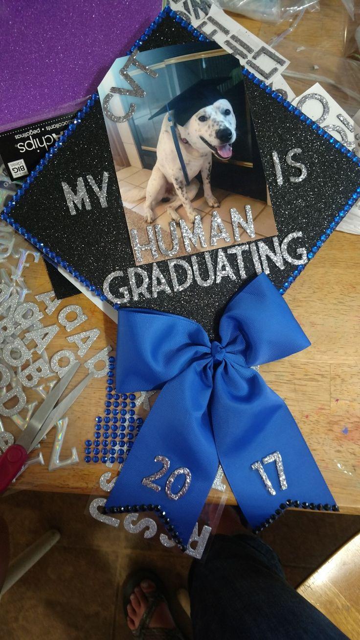 Graduation caps #vettech #blueheeler