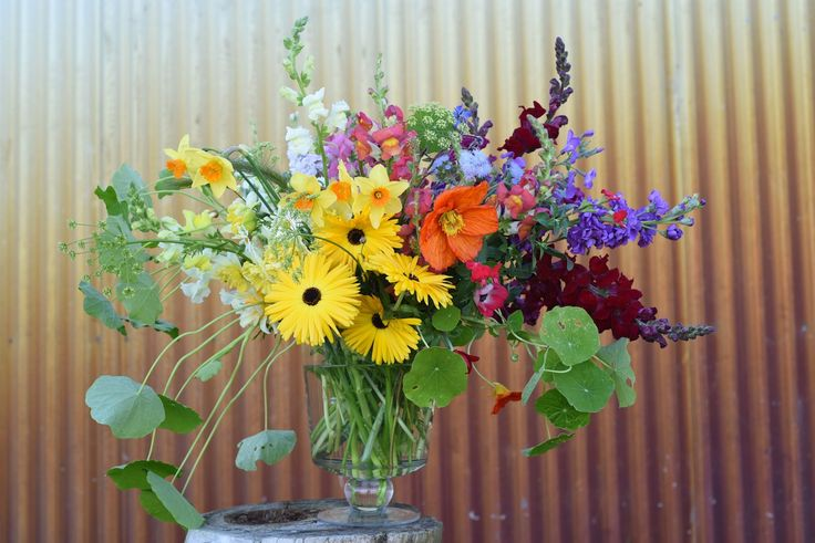 a rainbow of flowers. snapdragons, calendulas, daffodils, iceland poppy, stocks, nasturtium