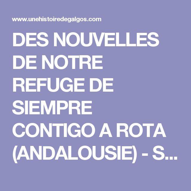 DES NOUVELLES DE NOTRE REFUGE DE SIEMPRE CONTIGO A ROTA (ANDALOUSIE) - Sauvetage, adoption de lévriers, galgos, podenco espagnols