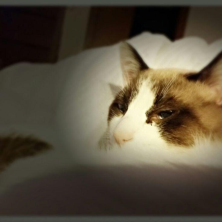 #cat #sleep #gatto #dormire