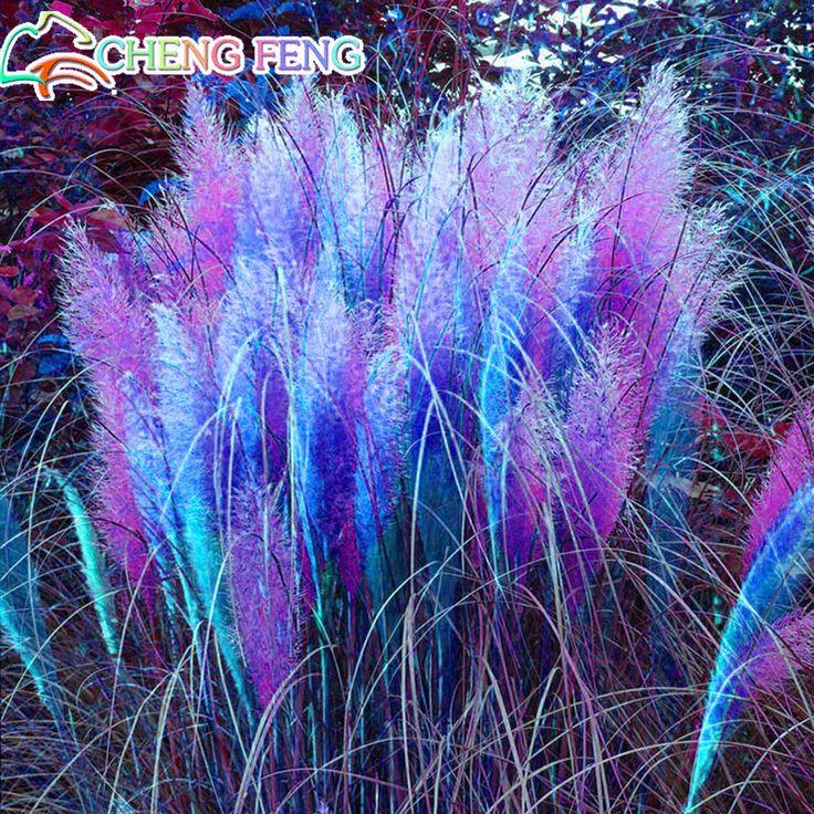 Aliexpress.com: Comprar Caliente venta! 50 Particle / Rare azul Pampas Grass semillas jardín de flores en maceta plantas ornamentales Cortaderia envío gratis semillas de Bonsais fiable proveedores en china seeds