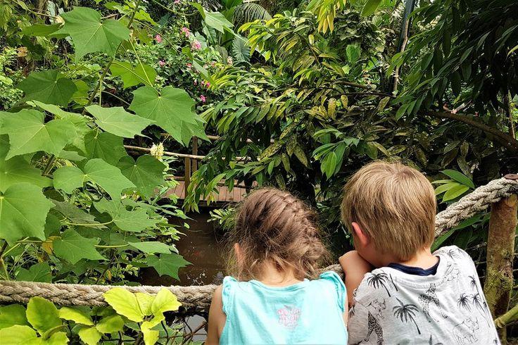 Spontane uitjes zijn soms de leukste verrassingen. Zo bracht ik vorige week nadat we de regen en binnen zitten zat waren een bezoekje aan Vlinders aan de Vliet . De kinderen vonden het erg bijzonder om alle vlinders en krokodillen te zien, en in de torentjes te klimmen en ik bleef maar foto's maken op deze kleine maar fijne locatie. Ideaal voor als je er wel even tussenuit wil maar niet een hele dag! https://www.mamaliefde.nl/blog/vlinders-aan-de-vliet/