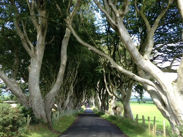 Dark Hedges, N. Ireland
