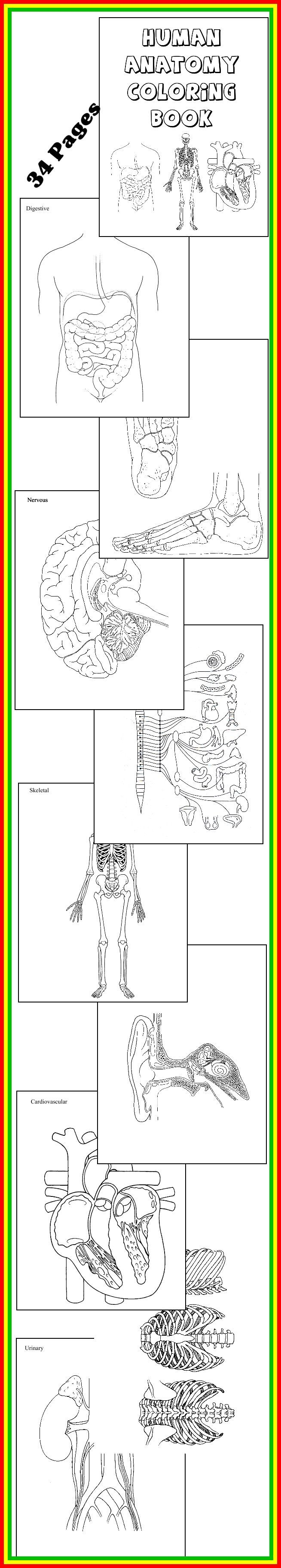 "Cycle 3 - HUMAN ANATOMY COLORING BOOK * 32 diagrams to color and label! Download Club members can download @ http://www.christianhomeschoolhub.spruz.com/science-1st---12th.htm (Under ""The Human Body - Unit Studies)"