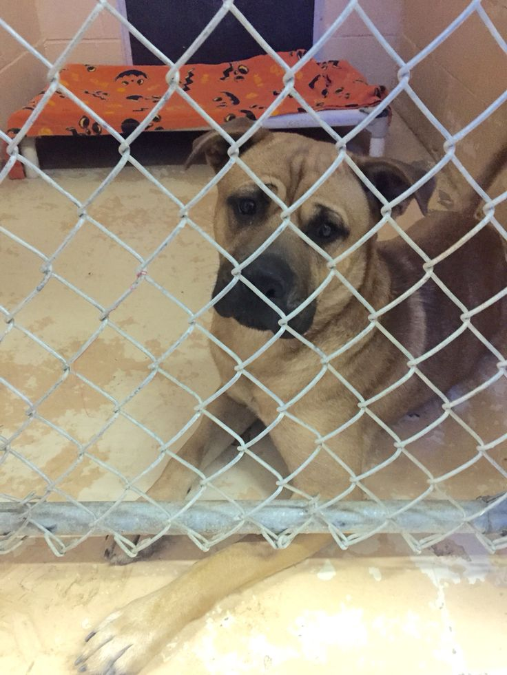 Please adopt Sketch at the Calhoun County Animal Shelter Animal Shelter Union St S in Michigan. Find A ...