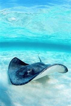 Bali Duiken. Huur www.villabuddha.com € 1495,- per week en u verblijft bij het mooiste onderwaterreservaat van Bali, Menjangan Island
