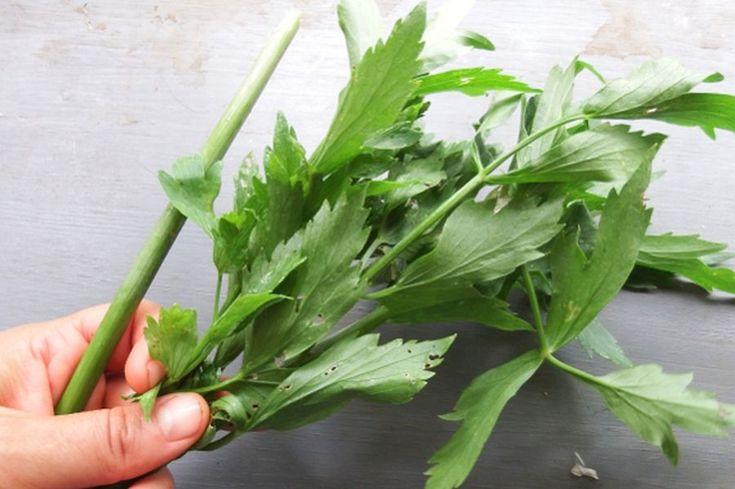 Mestecaţi 1-2 frunze de LEUŞTEAN, înainte şi după masă: efectele sunt puternice şi imediate - Top Remedii Naturiste