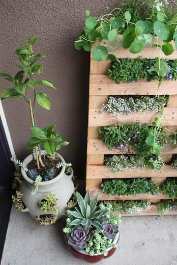 DIY Small Space Pallet Garden by lifeonthebalcony via apartmenttherapy.