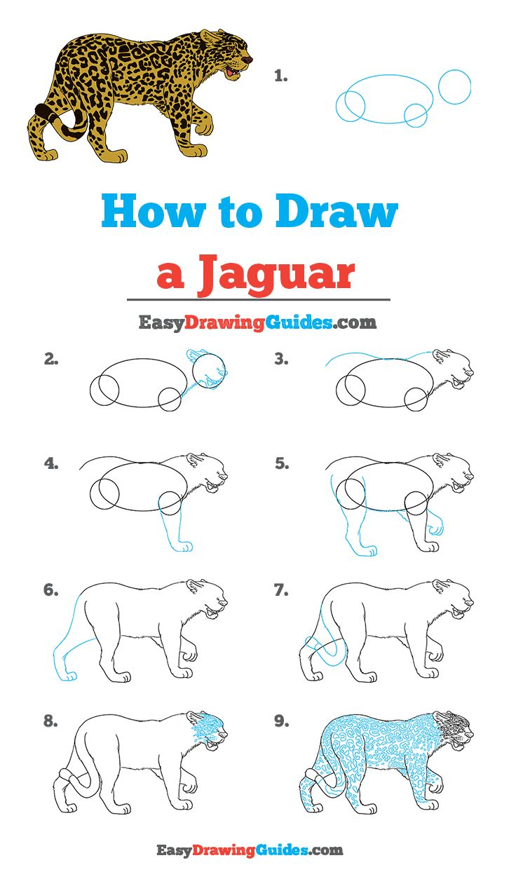 How to Draw a Jaguar   Really Easy Drawing Tutorial in 20 ...