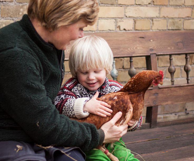 Barn holder høne. Child carrying a chicken.