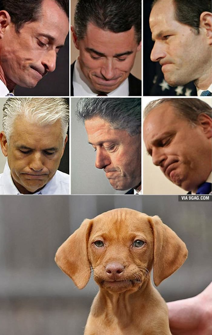 How to tell if your dog is involved in a sex scandal.....