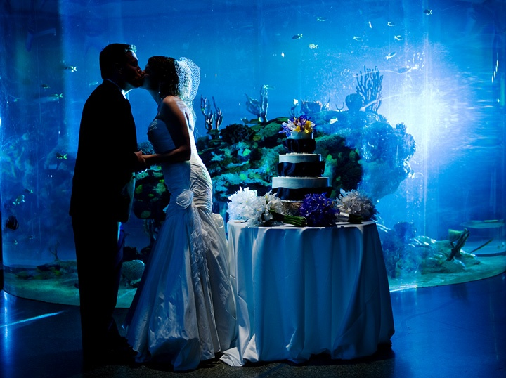 Charleston Aquarium Wedding 3 Travel Journeys Destination Weddings Honeymoons Www Ideas In 2018