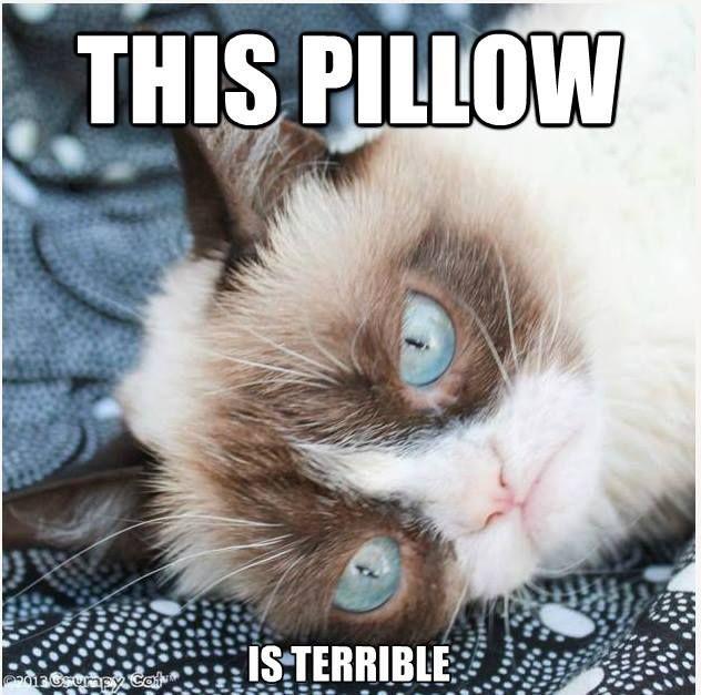 The Official Grumpy Cat   Cheezburger!   Grumpy cat ...