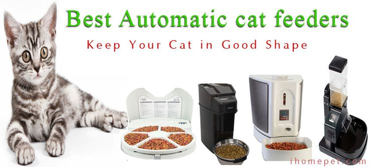 Best Automatic Cat Feeder: Keep Your Cat in Good Shape