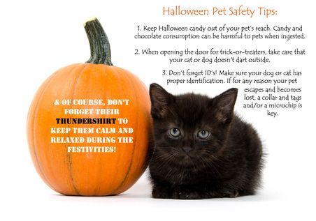 ThunderShirt's Pet Safety Tips for Halloween -  #ThunderTips --   SHARE for a chance to win a $100 ThunderWorks Gift Certificate