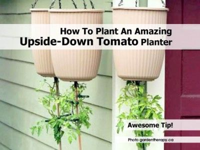 1000 images about gardening on pinterest gardens bird - Can a plant grow upside down ...