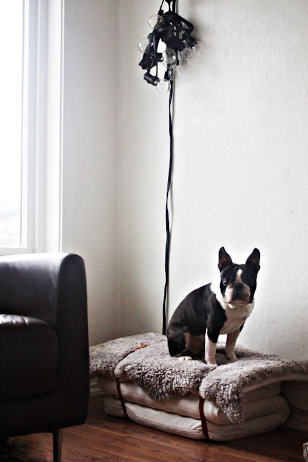 Минимализм и собака!